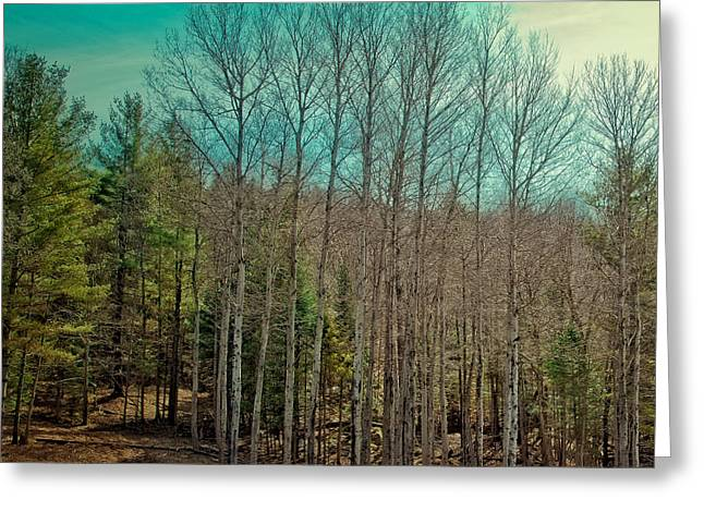 Birch Trees In The Spring Greeting Card