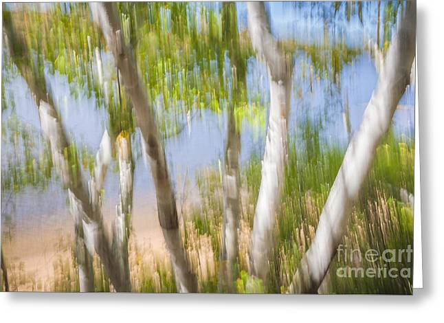 Birch Trees On Lake Shore Greeting Card