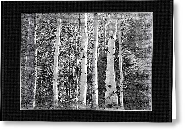 Greeting Card featuring the photograph Birch Trees by Susan Kinney