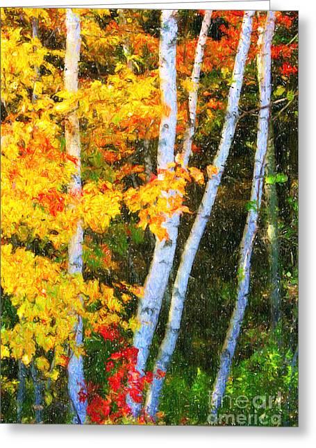 Birch Trees Greeting Card by Verena Matthew
