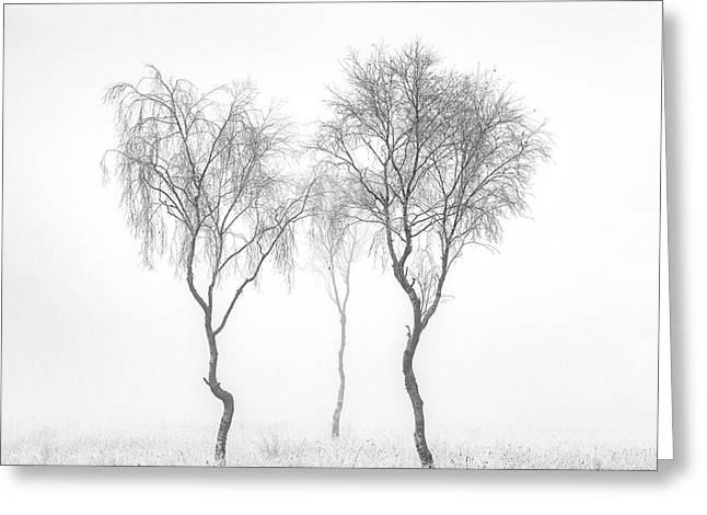 Birch Trio Greeting Card by Janet Burdon