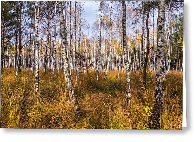 Birches And Grass Greeting Card