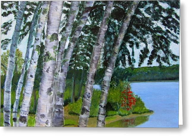 Birches At First Connecticut Lake Greeting Card