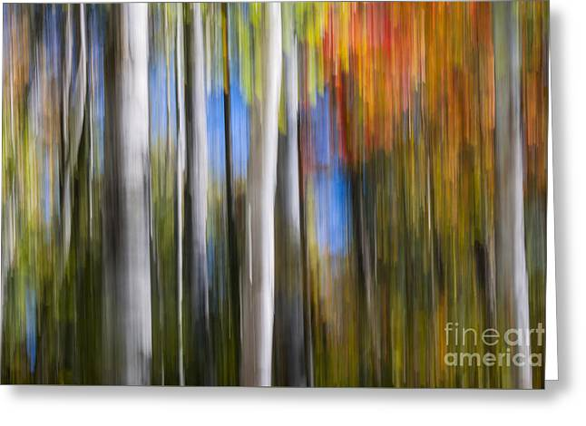 Birches In Autumn Forest Greeting Card