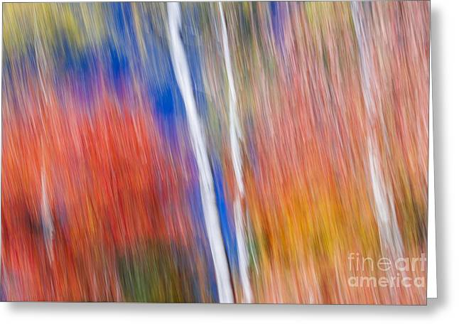 Birches In Red Forest Greeting Card
