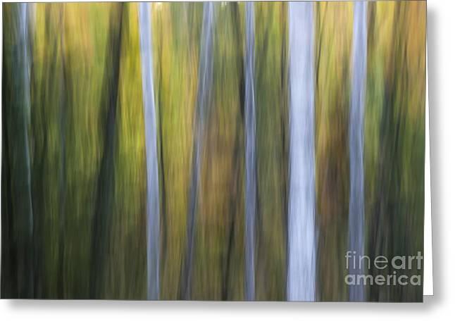 Birches In Twilight Greeting Card by Elena Elisseeva
