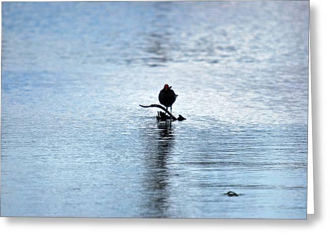 Bird 7986 Greeting Card by Teresa Blanton