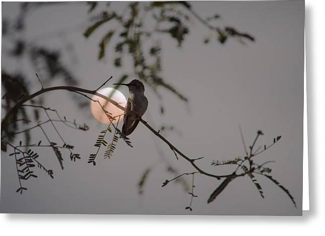Bird And Blood Moon Greeting Card by Carolina Liechtenstein