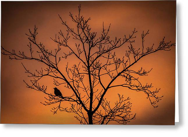 Bird And Tree Silhouette At Dusk Greeting Card by Terry DeLuco