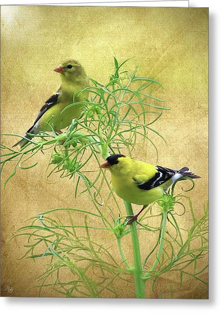 Bird Art - Goldfinch Greeting Card