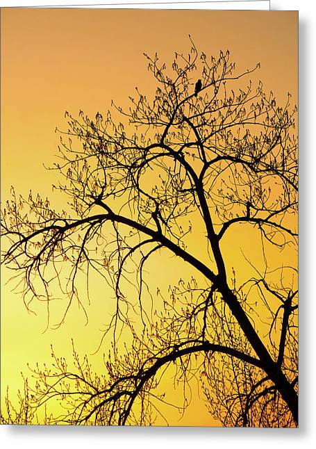 Bird At Sunset Greeting Card by James Steele