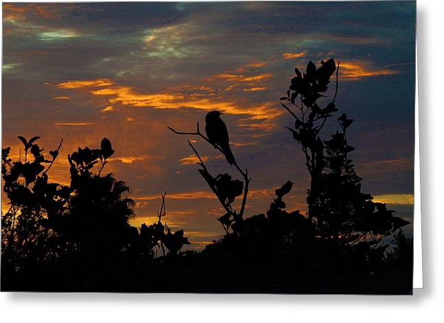 Bird At Sunset Greeting Card by Mark Blauhoefer