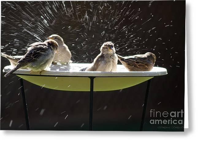 Bird Bathing Spree Greeting Card by Gordon Wood