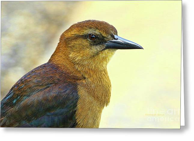 Greeting Card featuring the photograph Bird Beauty by Deborah Benoit
