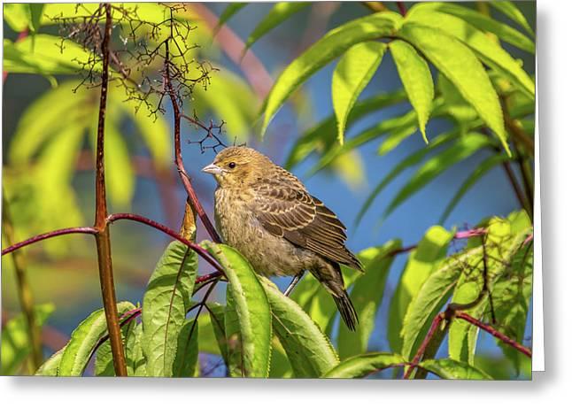 Bird Bush Blue Sky Greeting Card