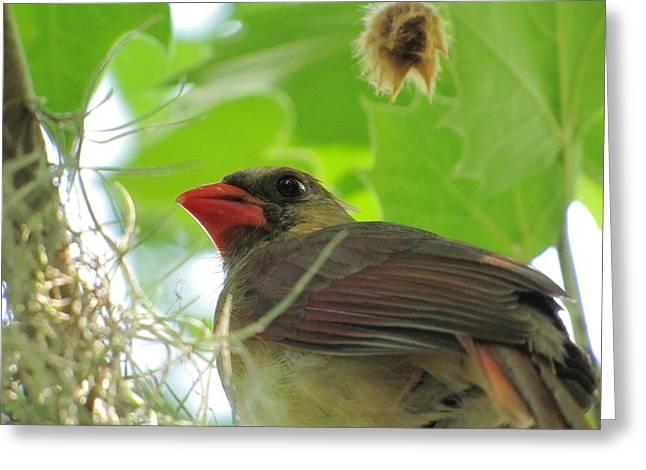 Bird Closeup Greeting Card by Jason Moore
