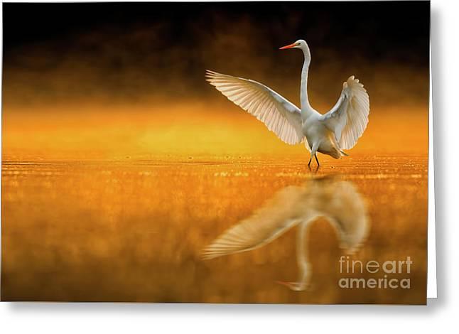 Bird Dance Greeting Card