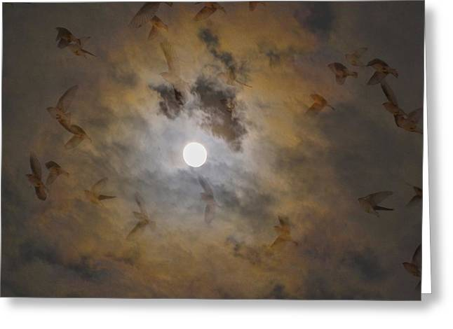 Bird Dreams Greeting Card by Sue McGlothlin