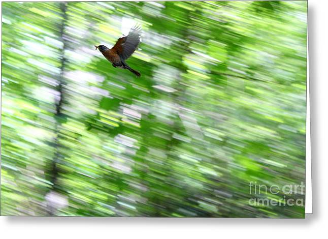 Greeting Card featuring the photograph Bird by Farzali Babekhan