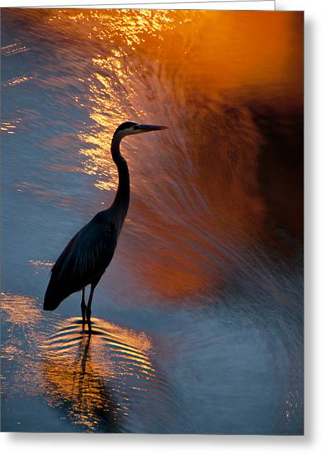 Bird Fishing At Sundown Greeting Card by Williams-Cairns Photography LLC