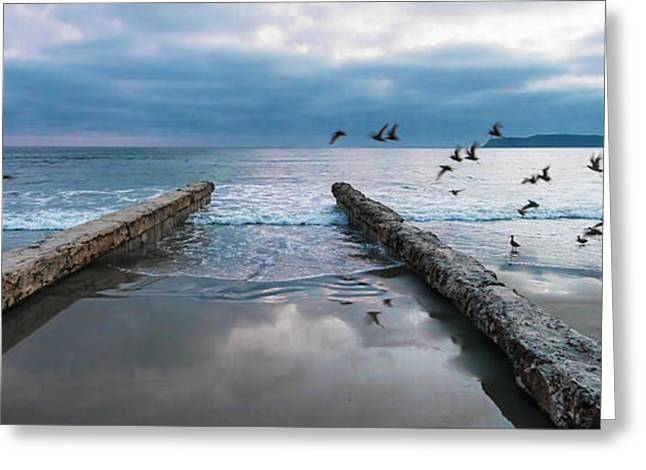 Greeting Card featuring the photograph Bird Flight by Dan McGeorge