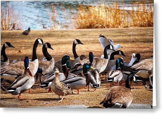 Bird Gang Wars Greeting Card