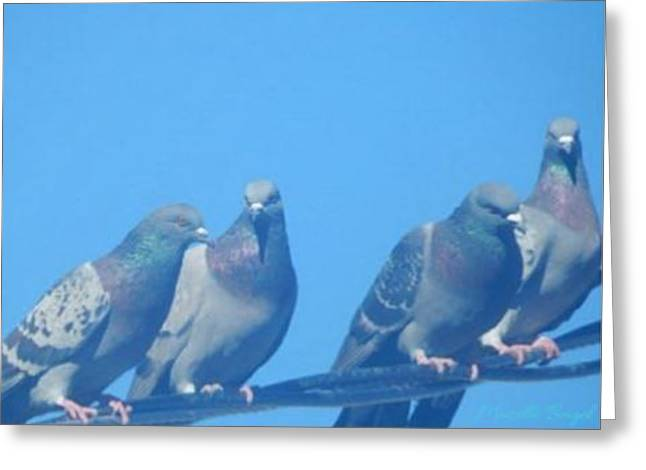 Bird Gossip Greeting Card