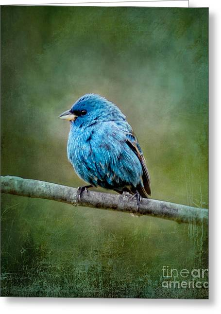 Bird In Blue Indigo Bunting Ginkelmier Inspired Greeting Card