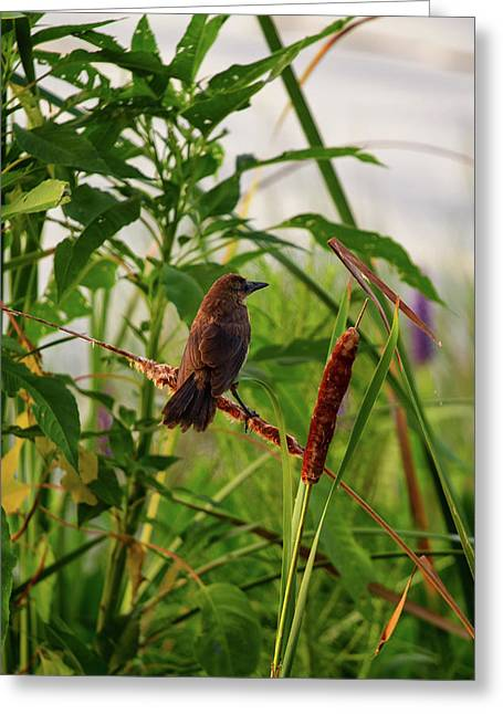 Bird In Cattails Greeting Card