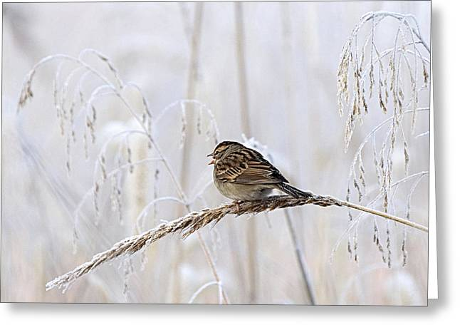 Bird In First Frost Greeting Card