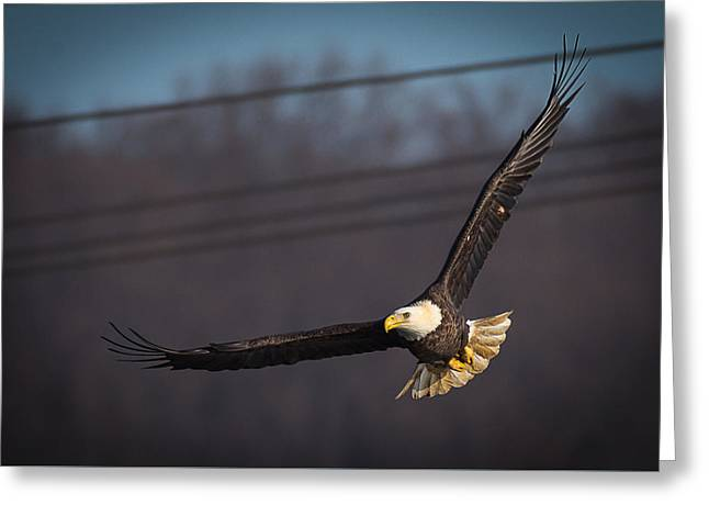 Greeting Card featuring the photograph Bird In Flight  by Cindy Lark Hartman