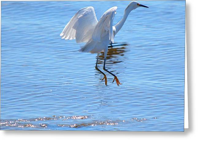 Bird In Paradise Greeting Card by Patricia Twardzik