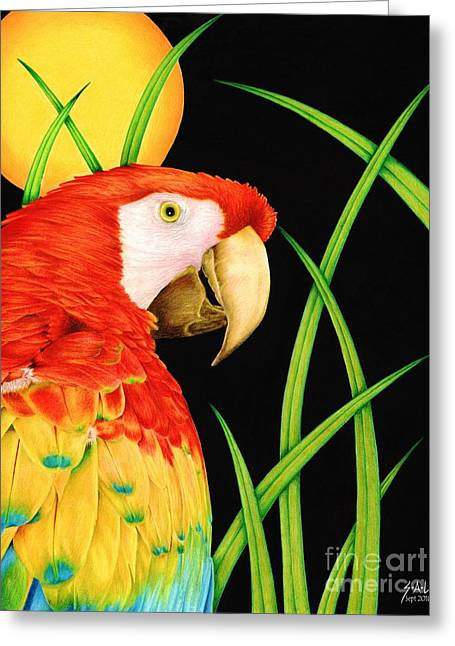 Bird In Paradise Greeting Card by Sheryl Unwin
