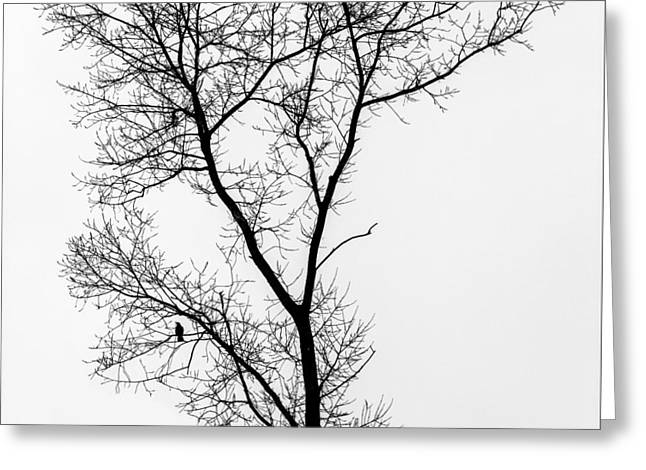 Bird In Tree Greeting Card by Wim Lanclus