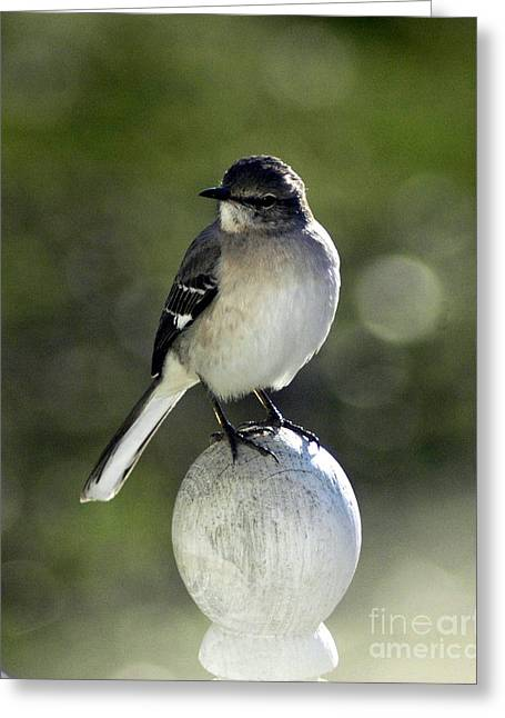 Bird Greeting Card by Lynn Reid
