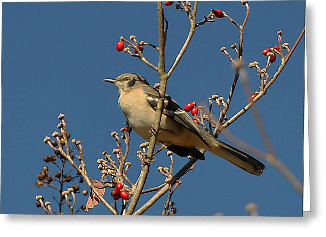 Bird N Berry Greeting Card by Russ Mullen