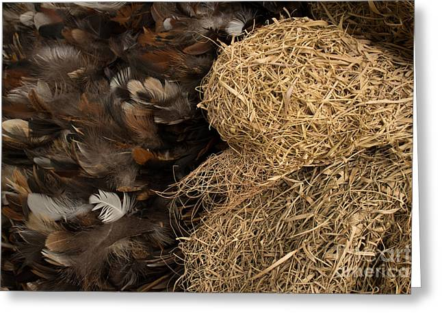 Bird Nest And Feathers Greeting Card by Jason Rosette
