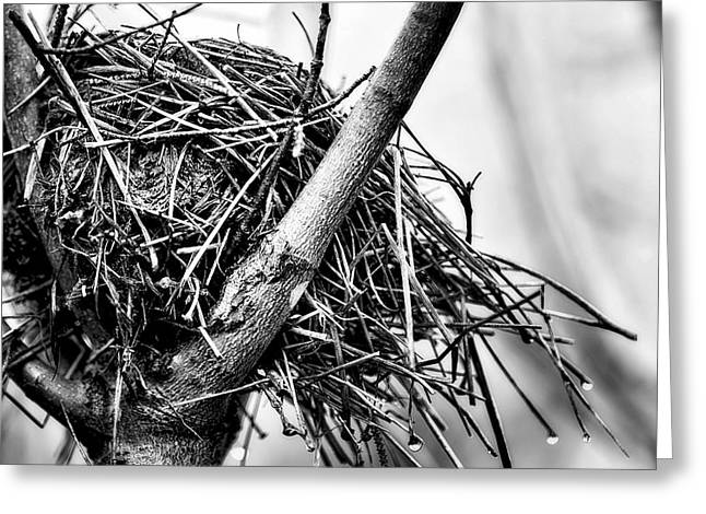 Bird Nest Greeting Card by Melissa  Connors