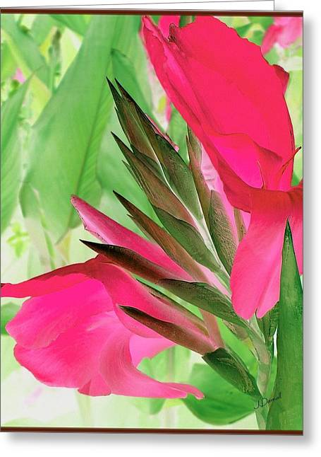 Bird Of Paradise 2 Greeting Card by Jim  Darnall