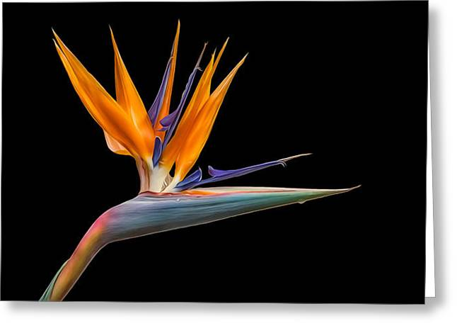Bird Of Paradise Flower On Black Greeting Card