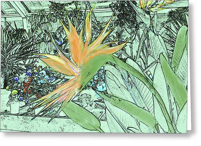 Greeting Card featuring the photograph Bird Of Paradise In The Hothouse by Nareeta Martin
