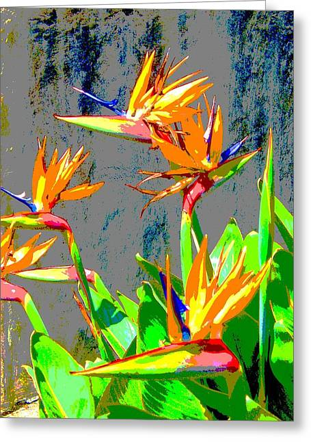 Bird Of Paradise Greeting Card by Scott K Wimer