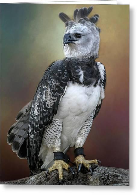 Bird Of Prey Greeting Card by David and Carol Kelly