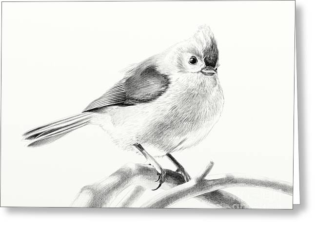 Bird On A Branch Greeting Card by Eleonora Perlic