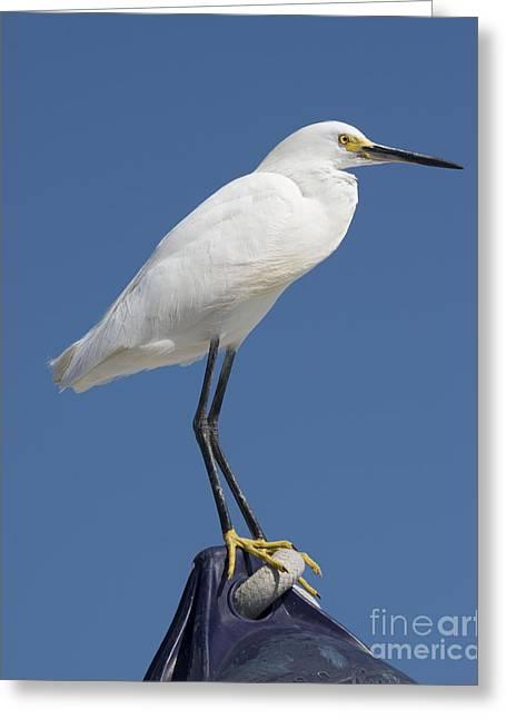 Bird On A Buoy Greeting Card by Loriannah Hespe