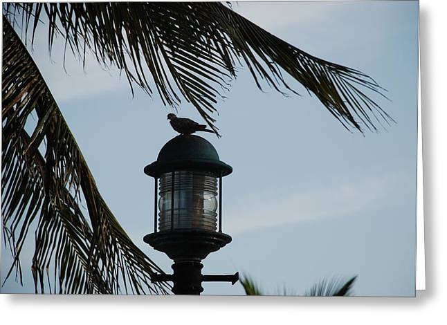 Bird On A Light Greeting Card by Rob Hans