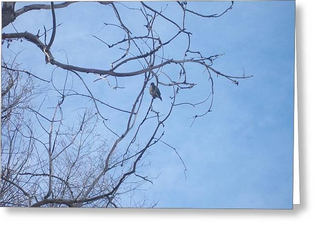 Bird On A Limb Greeting Card by Jewel Hengen