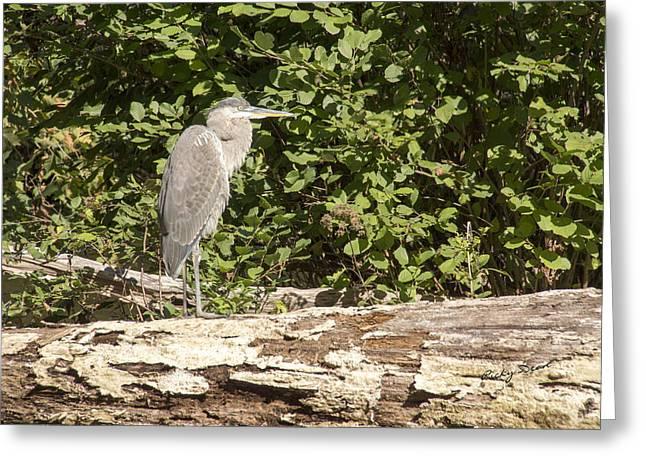 Bird On A Log Greeting Card