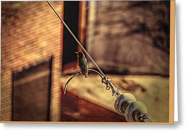 Bird On A  Wire Greeting Card by Bob Orsillo