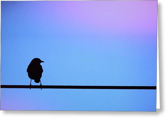 Bird On A Wire Silhouette Greeting Card